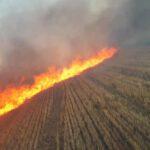 Spłonęło 20 hektarów zboża i kombajn (1)